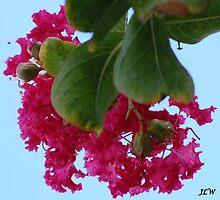 Pink by jweekley
