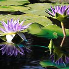 Midnight Caprice Water Lilies with Reflection by Robert Armendariz
