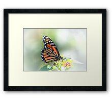 Monarch Bathed in Light Framed Print