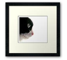 Sweet Kitty Face  Framed Print
