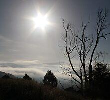 Yarra Valley-Morning Sun by WendyJC