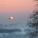 Stillness by Rosy Kueng