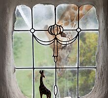 giraffe by Rachel Davison