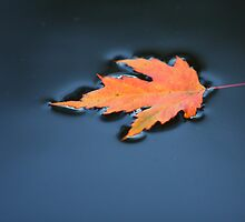 Autumn Arrives by Brian Dodd