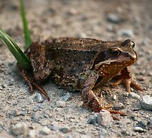 Just Another Toad by Håvard Bartnes