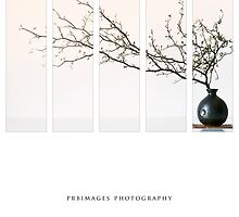 Vases And Flora by prbimages