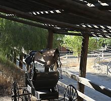 Horse Buggy by photobylorne