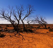 The Outback by Hans Kawitzki