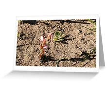 Red Beak Orchid Greeting Card