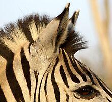 Zebra close up by Paul Watkins