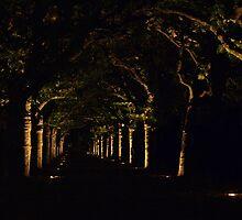 The tunnel of light by jonpalma