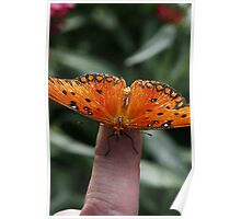 Butterfly on Finger Poster
