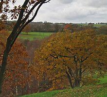 Adel Autumn 5 by WatscapePhoto