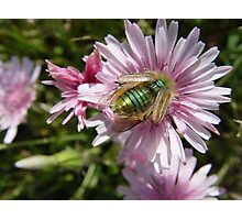 Insect on Flower Photographic Print
