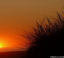 #493  Sunset With Grass Silouette by MyInnereyeMike