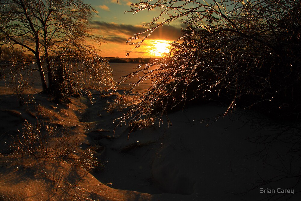 The Ice Storm by Brian Carey
