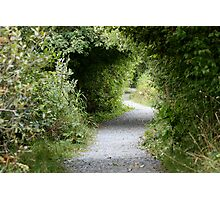 A Winding Path Photographic Print