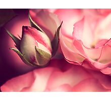 time brings roses Photographic Print
