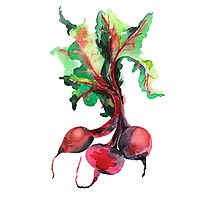 Watercolor image of beet root on white background.  Photographic Print