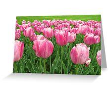 Pretty Pink Tulips digitally enhanced photographic art Greeting Card