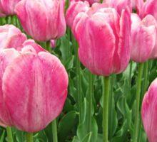 Pretty Pink Tulips digitally enhanced photographic art Sticker