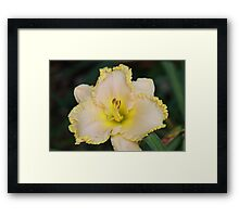 Cream and Yellow Lily Framed Print