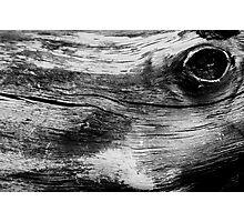 Trunk Photographic Print