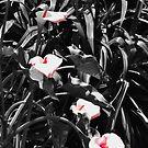 Pinkish Lilies by Jen Waltmon