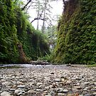 Fern Canyon by ShutterlyPrfct