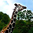 Giraffe by Kklove