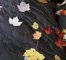 Leaf covered rock by jrier