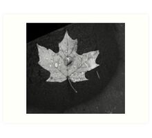 Maple Leaf and Rock Art Print