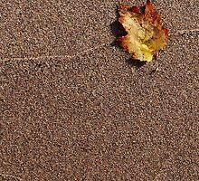 Maple Leaf on beach by jrier