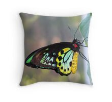 Cairns Birdwing Butterfly Throw Pillow