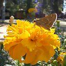 Yellow..So Bright I Think I'll Stop by NancyC