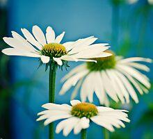 Three Flowers by Edwin Firminger