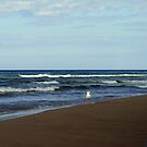 lone seagull by Lynne Prestebak