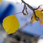 Yellow leafs, autumn by Kornrawiee