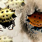Spiny Orb Weavers ... Halloween Spiders by Carmen Holly