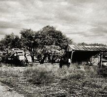 The Country Life 2  ( BoneYard Series ) by Carla Jensen