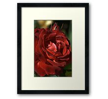 Richness in Tone Framed Print