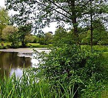 Mangerton Mill Lake , Bridport. Dorset UK by lynn carter