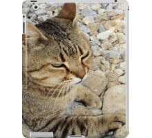 Relaxed Tabby Cat Against Stones and Pebbles iPad Case/Skin