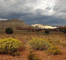 Kodachrome Basin State Park, Utah by CarolM