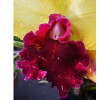 Orchid # 11 Photographic Print