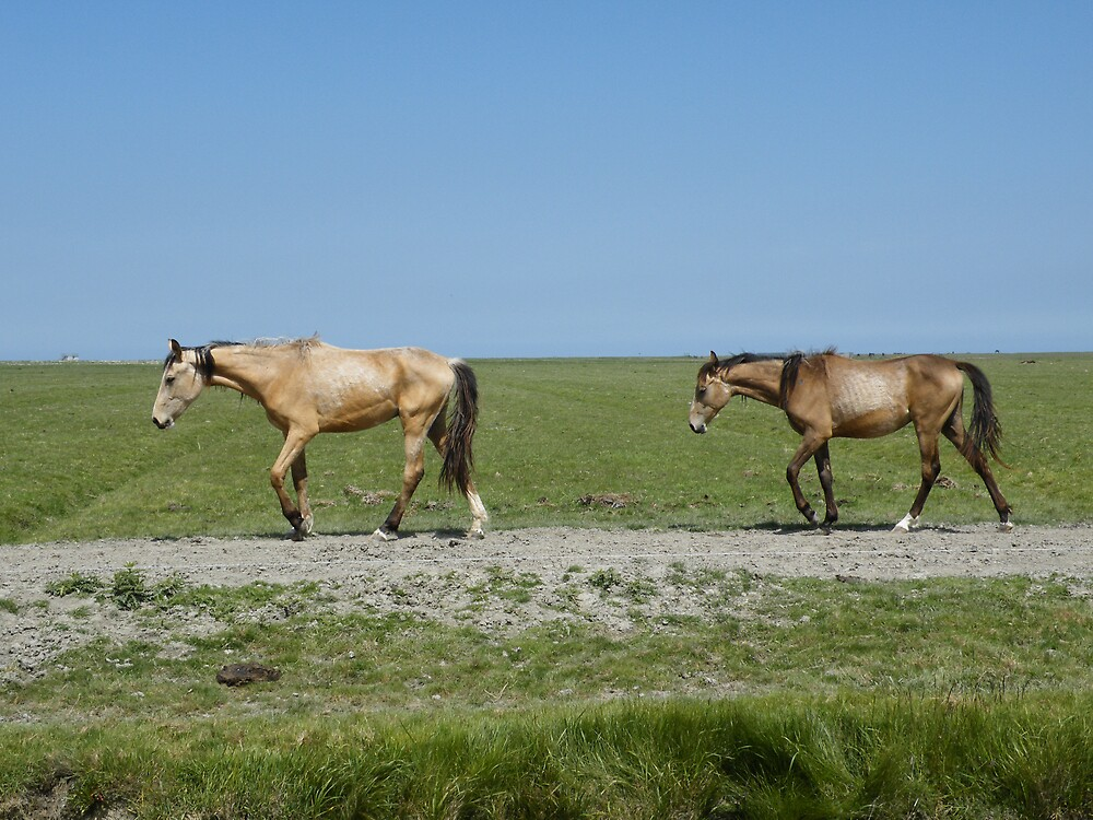 Horses at the Noarderleech 1 by mariamagdalena