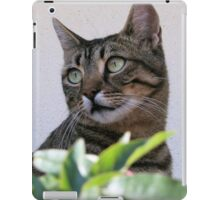 Tabby Cat Sitting In The Shade Behind Passiflora Vine iPad Case/Skin
