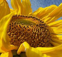 Sunny days by Yanira Greener
