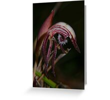 Red Beaks Greeting Card