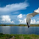Seagull coming in for a landing by Bonnie T.  Barry